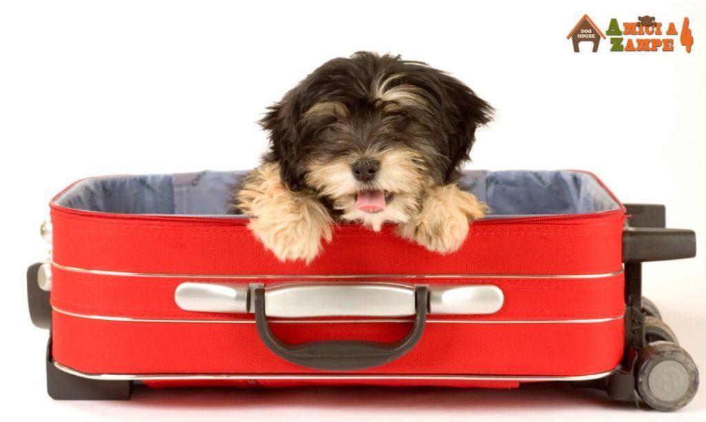 Trasportino Per Cani Impara A Scegliere Il Migliore Amici A 4 Zampe