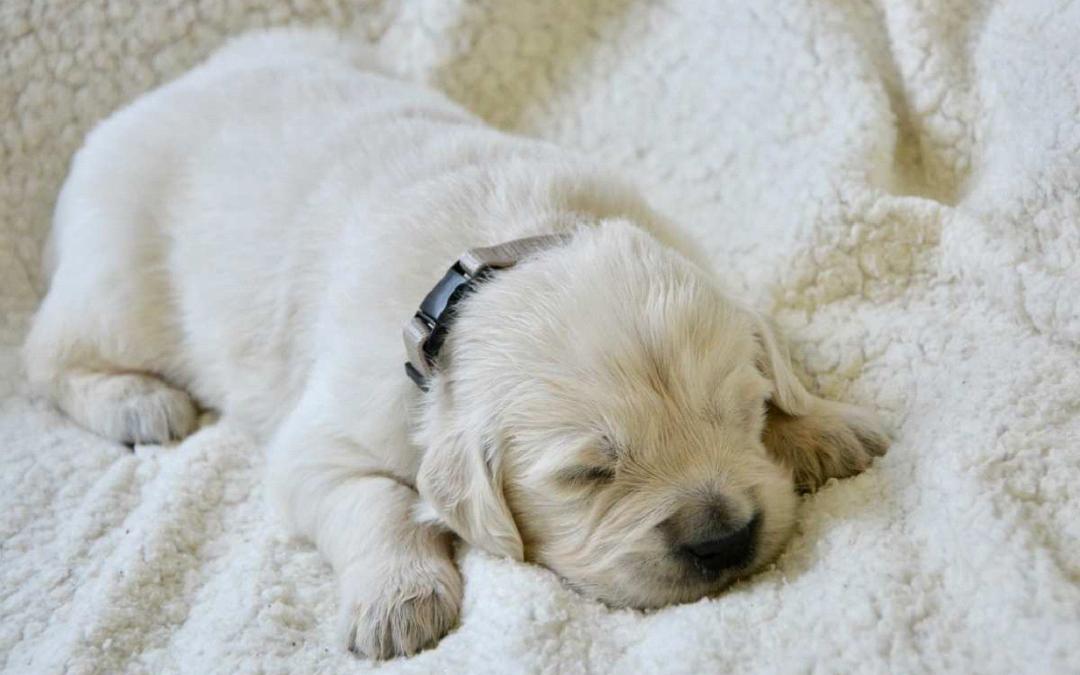 Sonno: come aiutare il tuo cane a dormire meglio